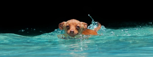 SwimmingDog-1